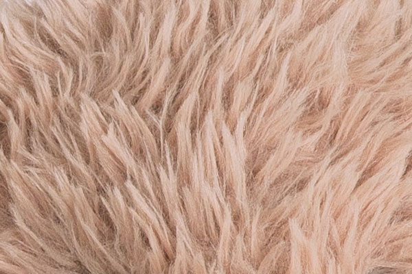 Aclose up image of the An image of the World's Softest Bunny fur